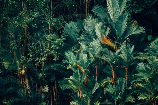 jungle_rse